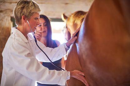 Une vétérinaire qui examine un cheval