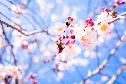 Le printemps est arrivé cette semaine...