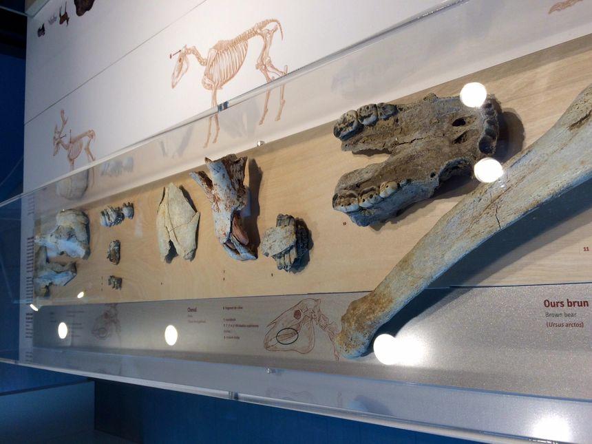 Des os d'animaux préhistorique.