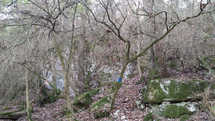 Les petites pousses vertes envahissent les forêts ces jours-ci, mais pas les buis dévorés l'été dernier par la pyrale
