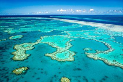 Après une année noire en 2016, la grande barrière de corail en Australie connaît un nouvel épisode de blanchissement de coraux du au réchauffement climatique.