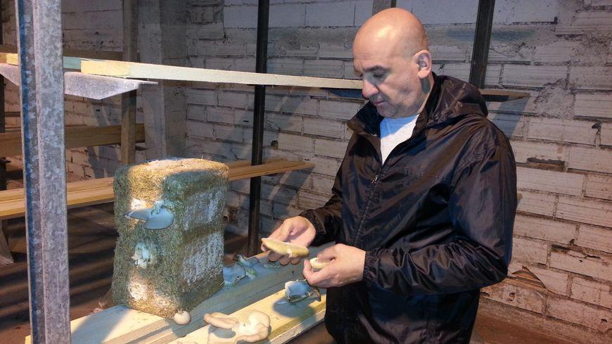 Olivier Rivet, l'initiateur du projet, a effectué des tests de culture de pleurotes sur substrat avant d'envisager la production à grande échelle.