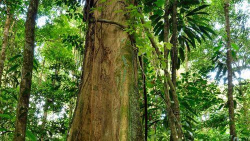 Vivre en Guyane (4/4) : « Oka*? Quelles nouvelles d'Amazonie ? »