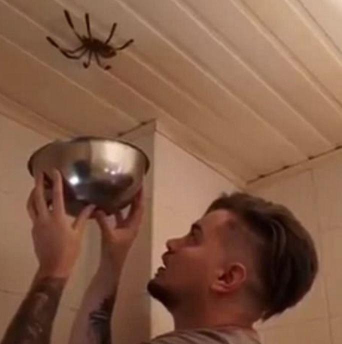 L'homme tente d'attraper cette grosse araignée avec un saladier