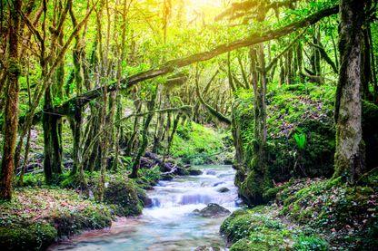 Forêt dans la montagne du Bugey dans l'Ain