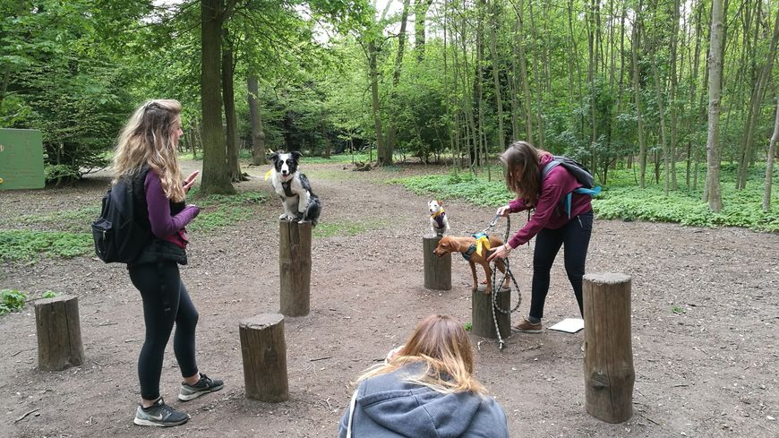 """L'épreuve du """"Woof Lanta"""" : faire tenir son chien en équilibre sur un poteau assez longtemps pour le prendre en photo!"""