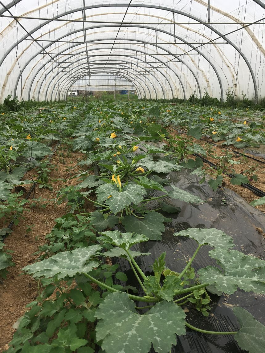 la belle saison des légumes arrive, ils sont dans les starting blocs
