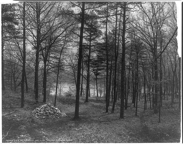 Photographie en noir et blanc de la « baie de Thoreau » (« Thoreau's Cove » en anglais), lieu où l'auteur de Walden édifia sa maisonnette.