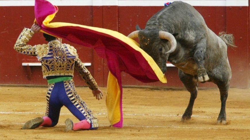 Selon un sondage Ifop, 75 % des habitants, des départements taurins, sont contre les corridas avec mise à mort.