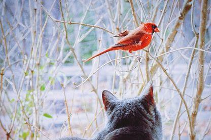 Entre chat et oiseau