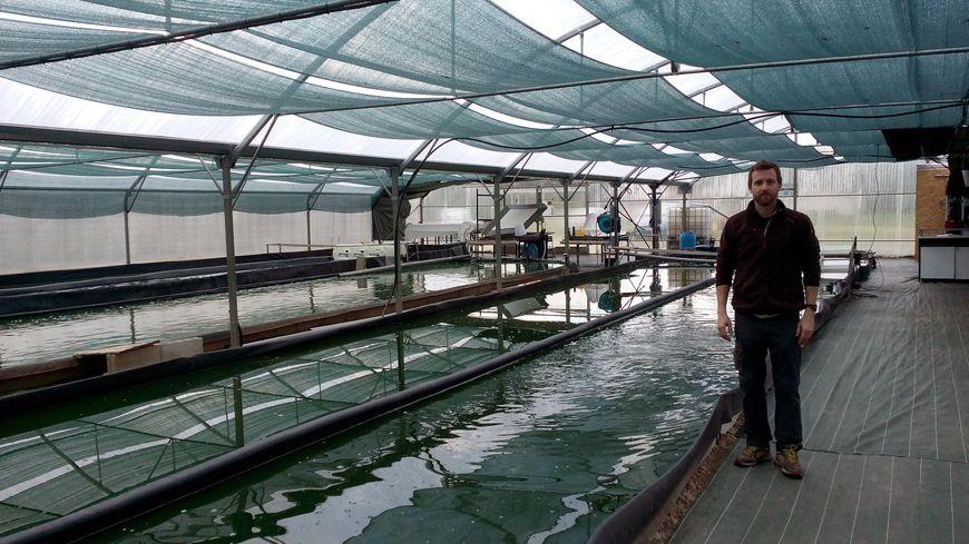 Vincent Libeaut cultive la spiruline dans des bassins, sous serre.