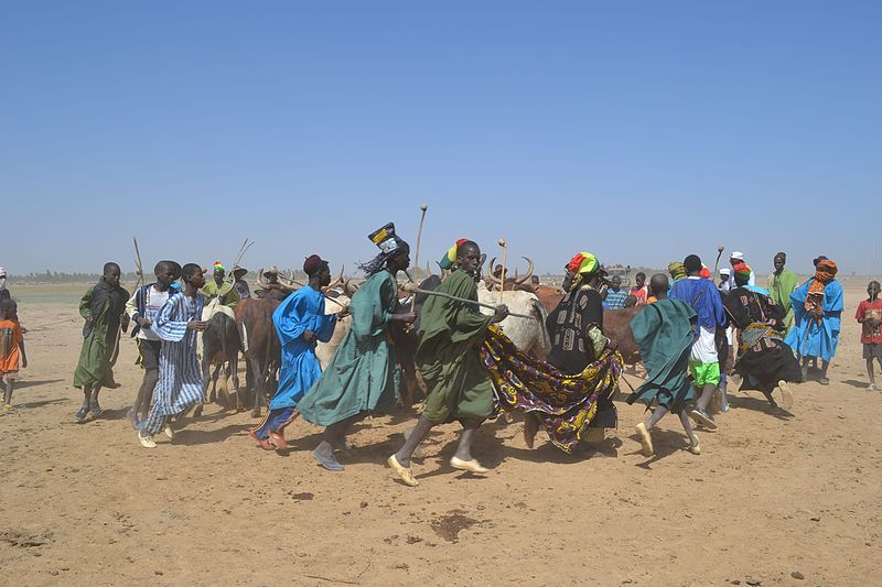 Danse des peuls avec les bœufs encerclés au milieu de la foule au Mali, 14 décembre 2014