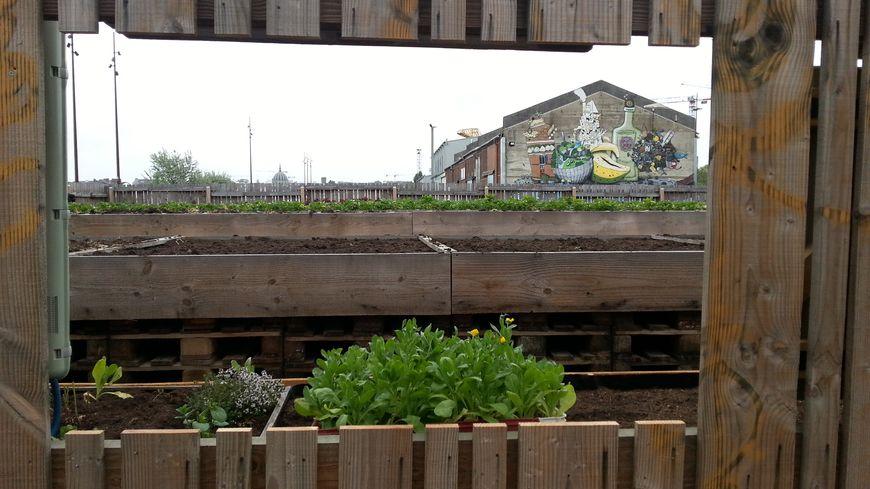 L'an dernier, les visiteurs avaient été frustrés de ne pas avoir accès au potager urbain de la Cantine.