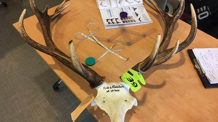 bec5ad68157 Les chasseurs de Côte-d Or exposent leurs 429 têtes de cerfs de l année à  Dijon ce week-end