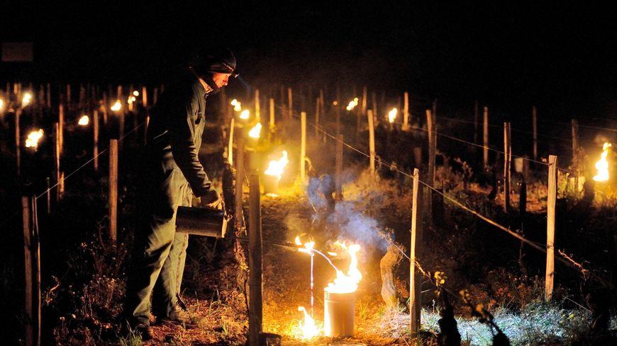 Une opération de brûlage dans un vignoble