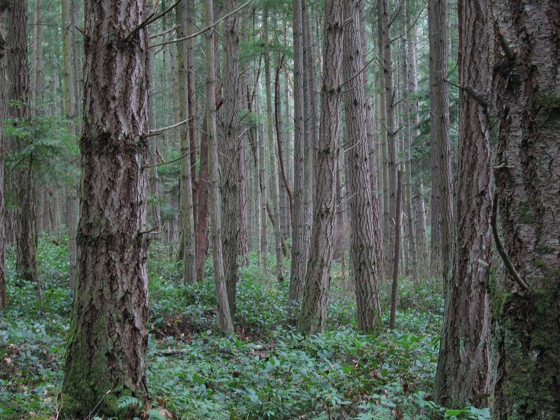 A forest on San Juan Island.