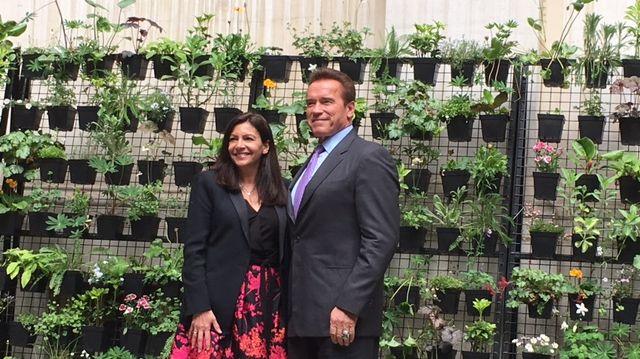 La maire de Paris, Anne Hidalgo a reçu Arnold Schwarzenegger à l'Hôtel de ville.