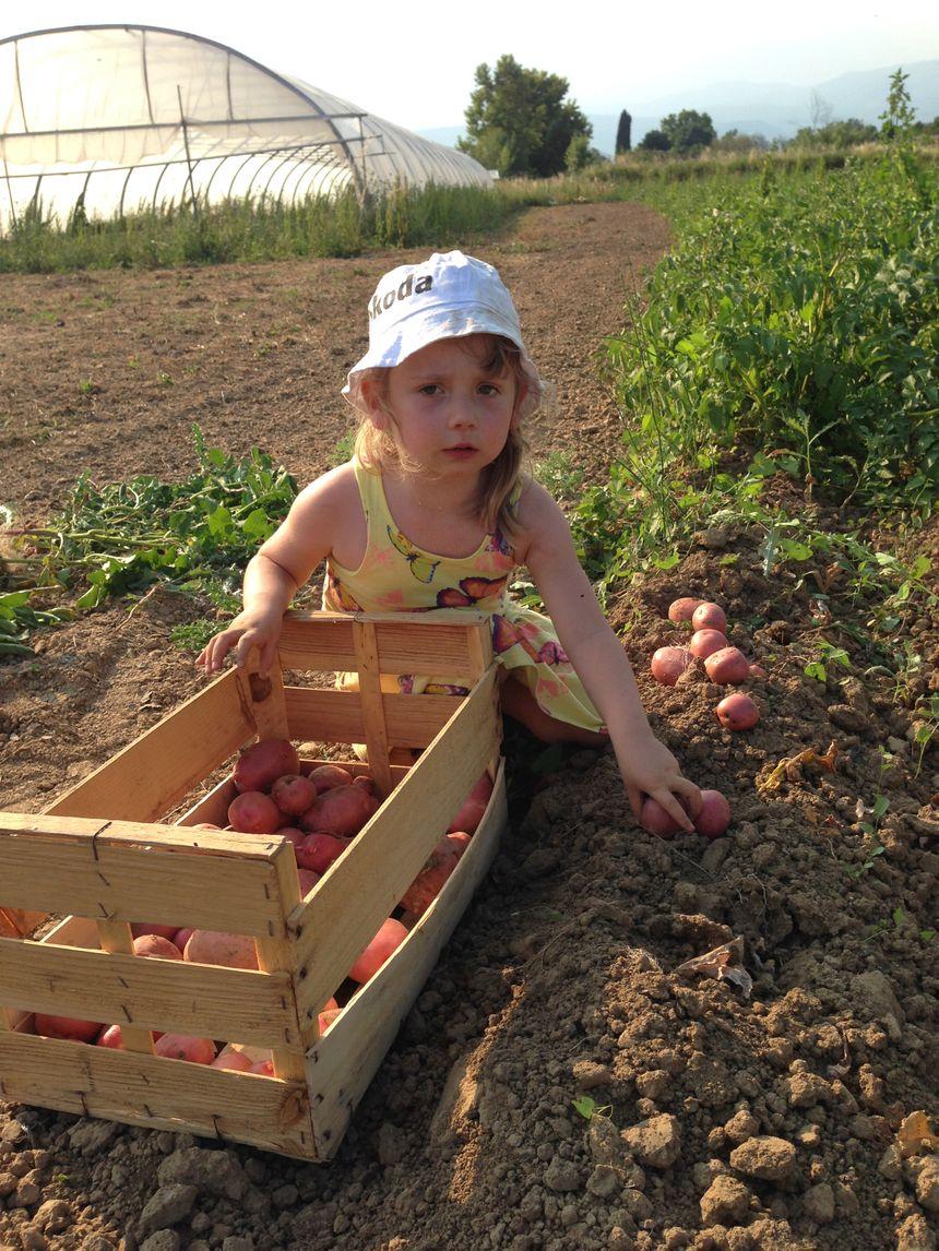A la ferme, tout le monde aime le travail de la terre.