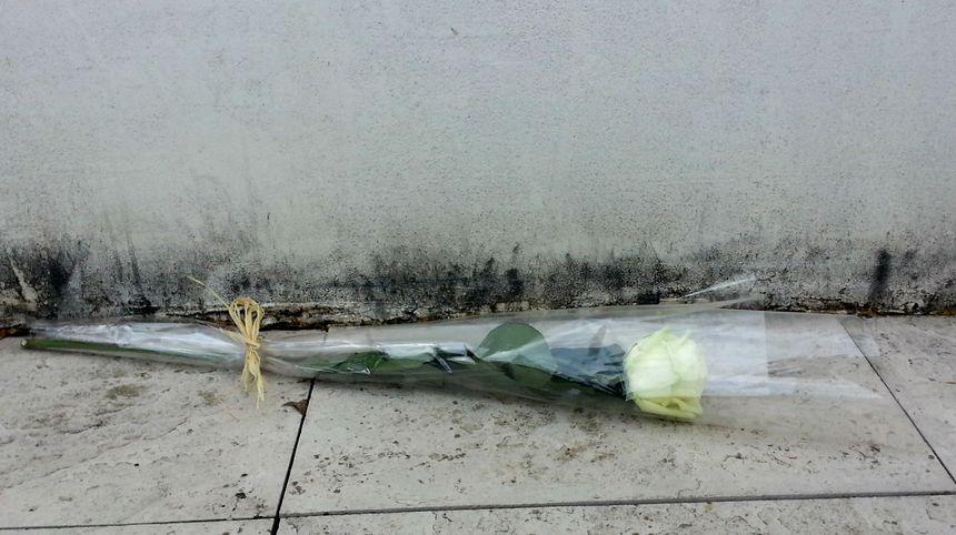 Une rose blanche a été déposé par une anonyme au commissariat d'Avignon