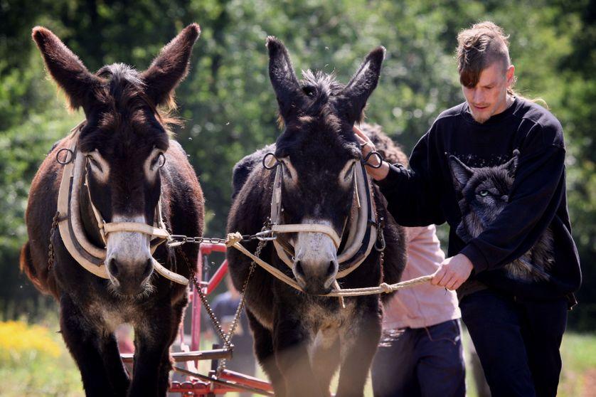 Stagiaires de l'association Prommata en formation à la conduite d'un âne de trait le 27 juin 2007 à Artigat