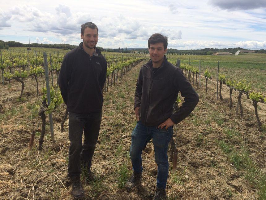 La grêle a causé des dégâts dans les vignes de Rémi et Luc Bayon, à la tête du Domaine de Gravennes à Suze-la-Rousse.
