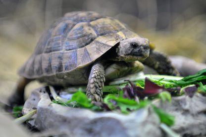 Une tortue dans le zoo de Lille