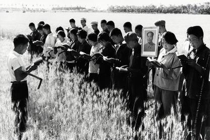 Chaque jour, avant de commencer le travail sur le terrain, les jeunes et les jeunes filles lisent et méditent ensemble certaines pensées « Mao Zedong ». L'agence Xinhua a écrit que cette photo a été tournée le 7 juillet 1967 près de Pékin.