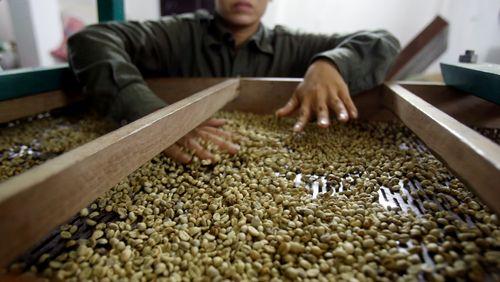 Épisode 3 : Les transformations de la caféiculture