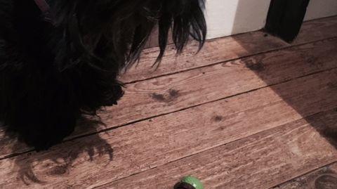 Rose-Marie scott, joue avec la game pet safe