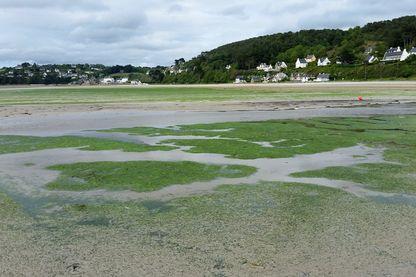 Le ramassage des algues a commencé avec un mois et demi d'avance à Saint-Michel-en-grève. Les algues finissent en épandage sur les champs et en compostage