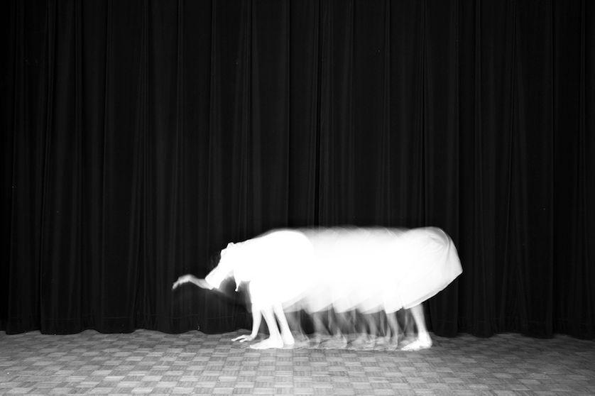 Guillaume Martial,  L'éléphant,  de la série  Animalocomotion,  2015 Epreuve Duratrans et boîte lumineuse 20 x 30 cm, édition de 3