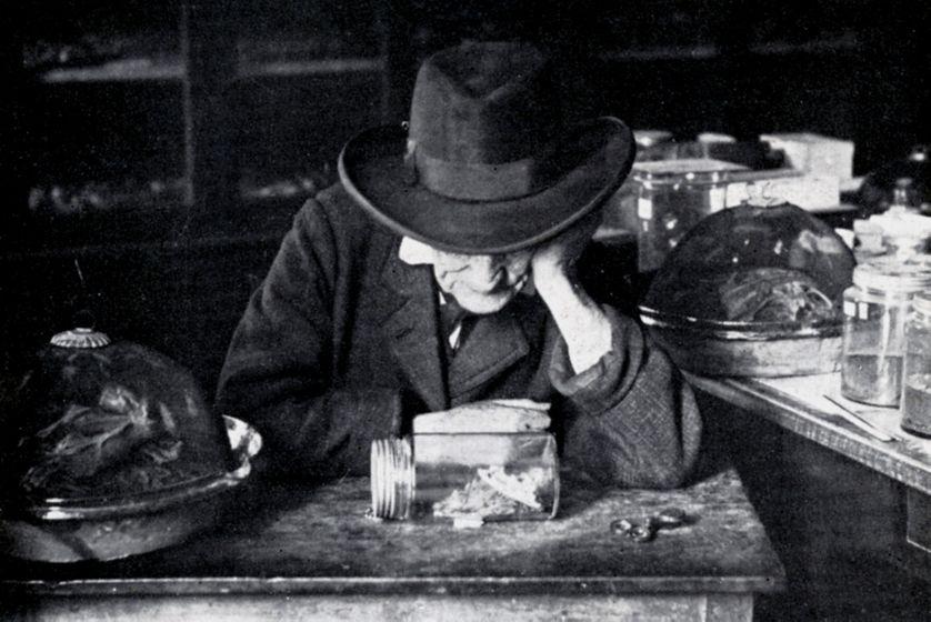 """Jean-Henri Fabre, """"L' Homère des insectes"""""""