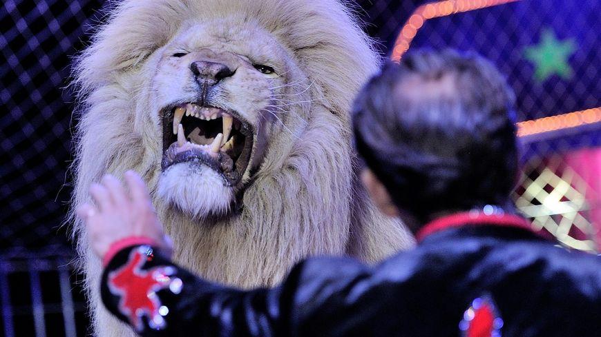 Un lion et son dompteur (illustration)