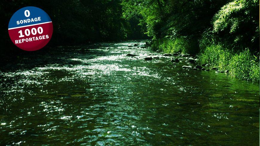 700 poissons doivent être équipés de mini émetteurs pour mieux comprendre leur façon de vivre dans la Doller.