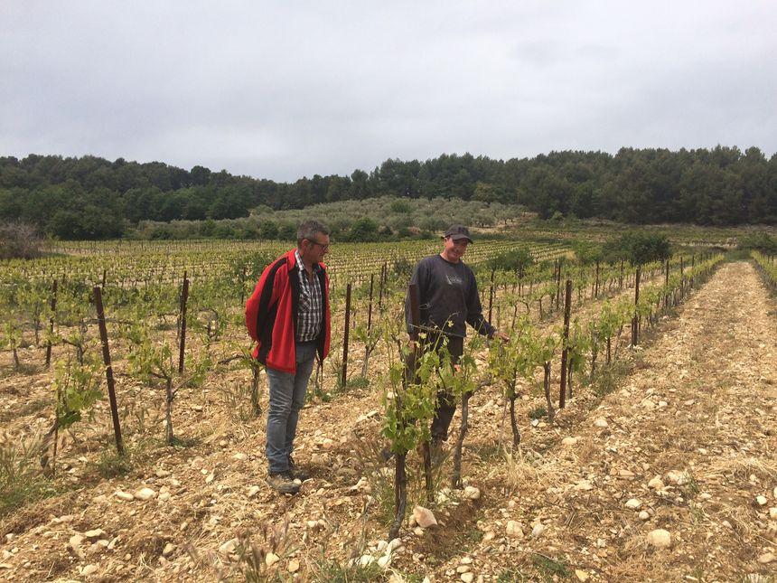 Damien Ruat (à droite), jeune viticulteur à Saint-Maurice-sur-Aygues va devoir trouver autre emploi à mi-temps pour s'en sortir suite aux épisodes de gel et de grêle qui ont touché ses vignes.
