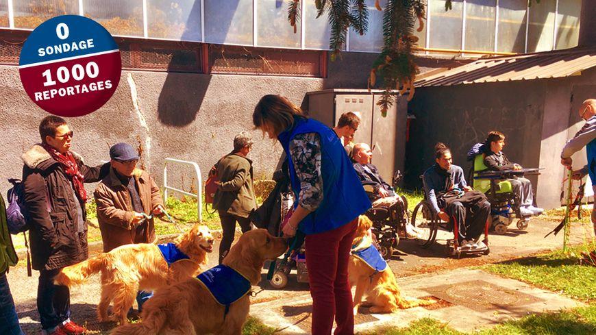 Une cérémonie de remise de chiens d'assistance avait lieu samedi après-midi sur le campus de Saint-Martin-d'Hères