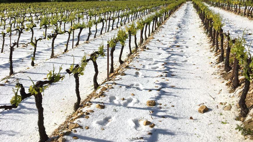 L'épisode de grêle, ce mardi, a causé de gros dégâts dans les vignes de Saint-Maurice-sur-Eygues, déjà touchées par le gel le 21 avril dernier.