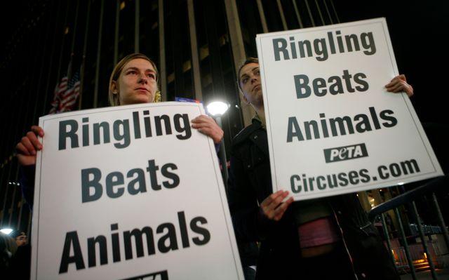 Chaque spectacle du cirque Barnum était accueilli par des défenseurs de la cause animale.