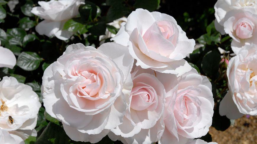 Fleurs De Mai A St Benoit