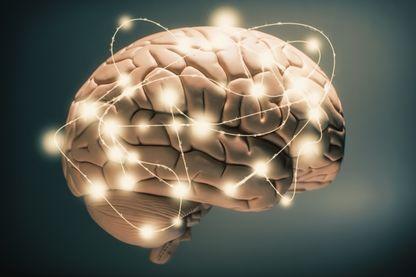 Le cerveau, comme vous n'en avez encore jamais entendu parler