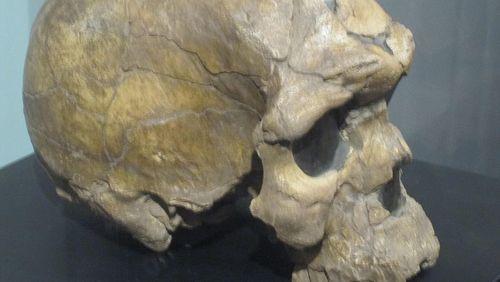 Homo sapiens : l'espèce orpheline (4/9) : La sortie d'Afrique
