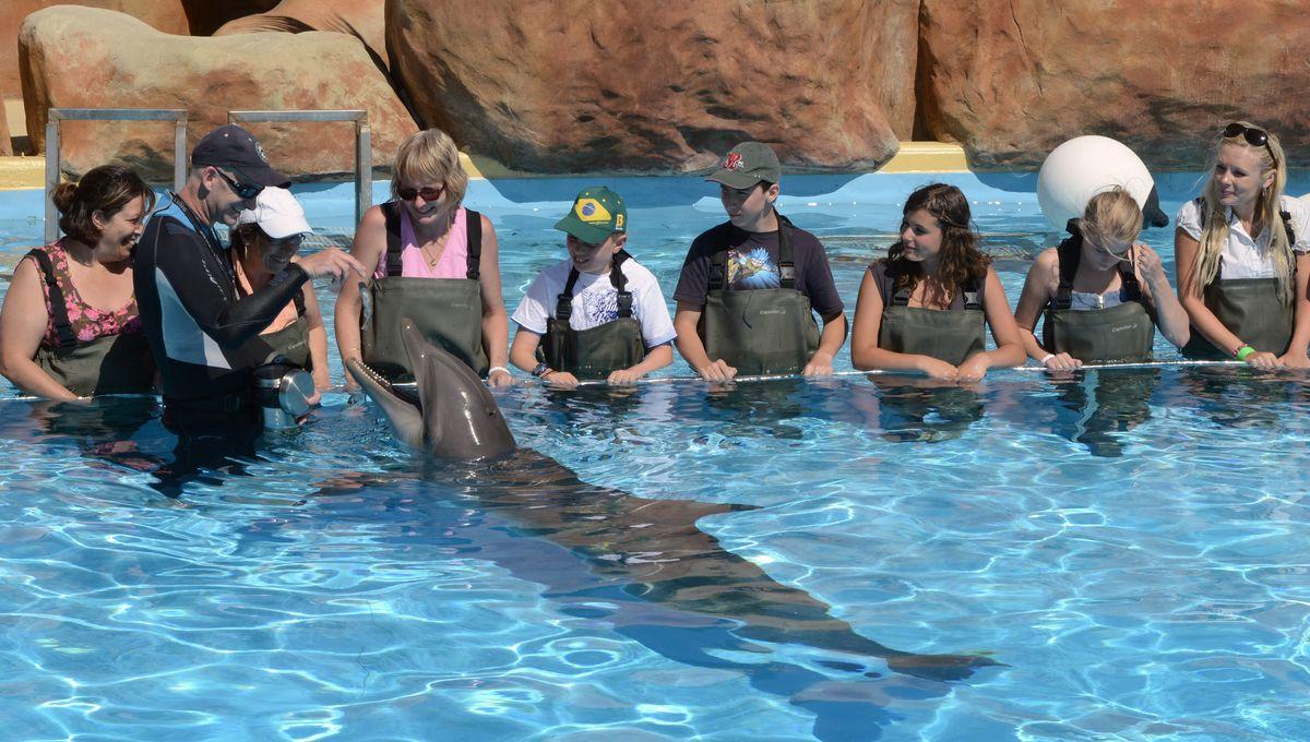 Marineland Antibes : la fin des baignades avec les dauphins