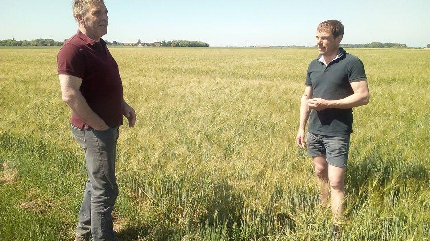 Thibault Henocque et Régis Brunet agriculteurs en Picardie Maritime