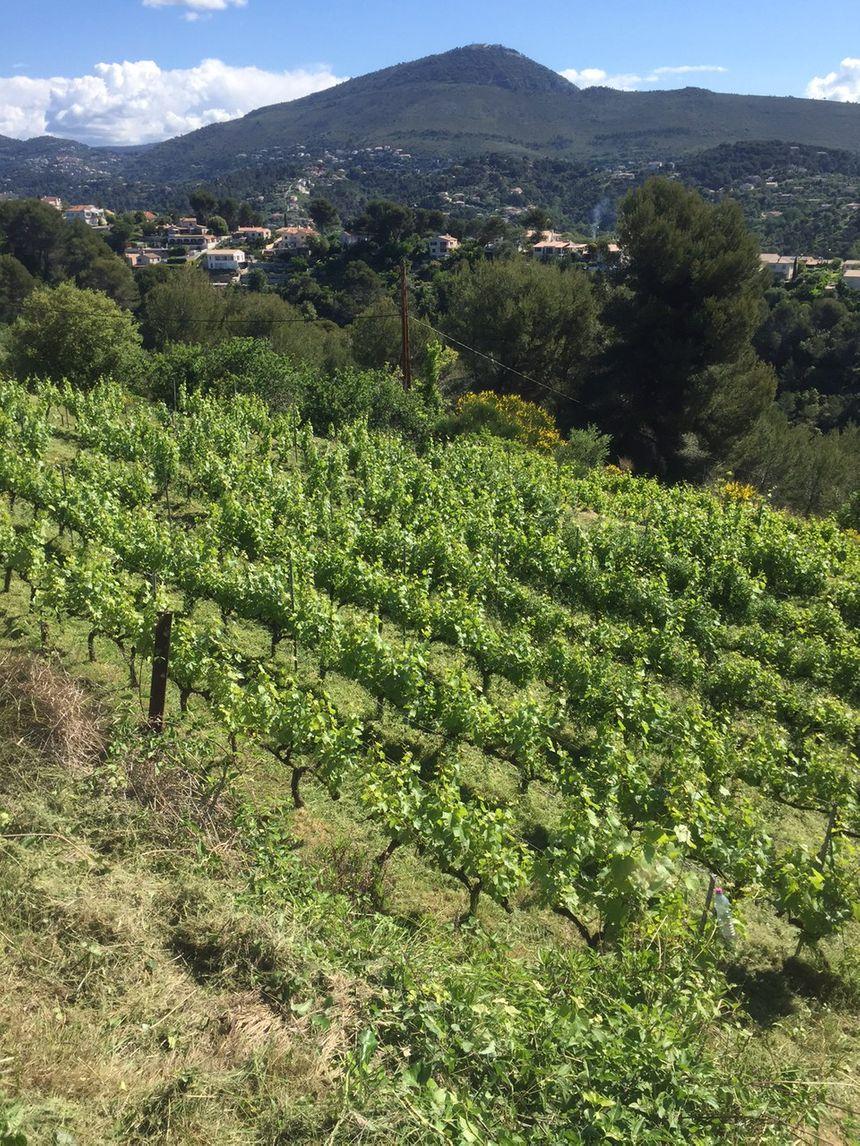Grandie comme les enfants avec les soins attentifs de Nathalie et Jean Patrick, le vignoble s'épanouit.