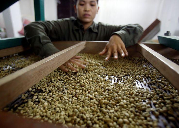 Une femme vérifie des grains de café dans une fabrique de café à Hanoï, Vietnam, 22 novembre 2016