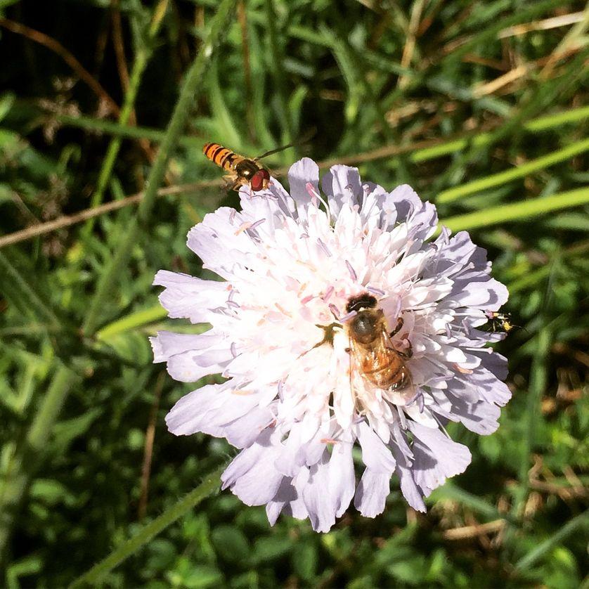 À l'Office des insectes et de l'environnement.