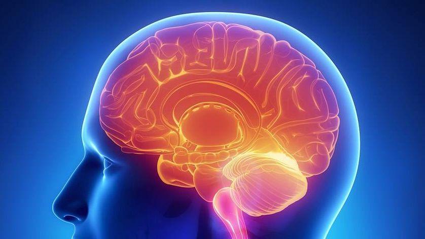 Un cerveau dans le ventre ?