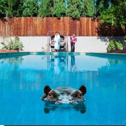 Pochette de l'album Hippopotamus des Sparks