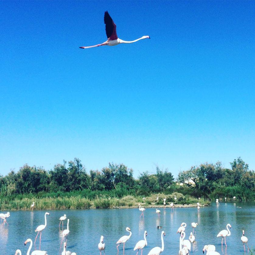 Au parc ornithologique du Pont de Gau, Camargue.