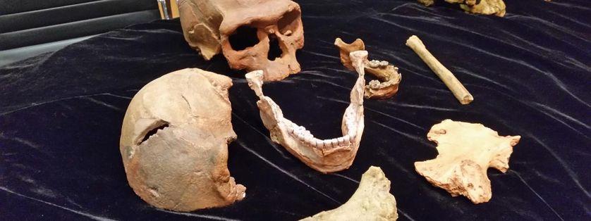 Les différents fossiles retrouvés par les anthropologues entre 2004 et 2016, à Jebel Irhoud, au Maroc.